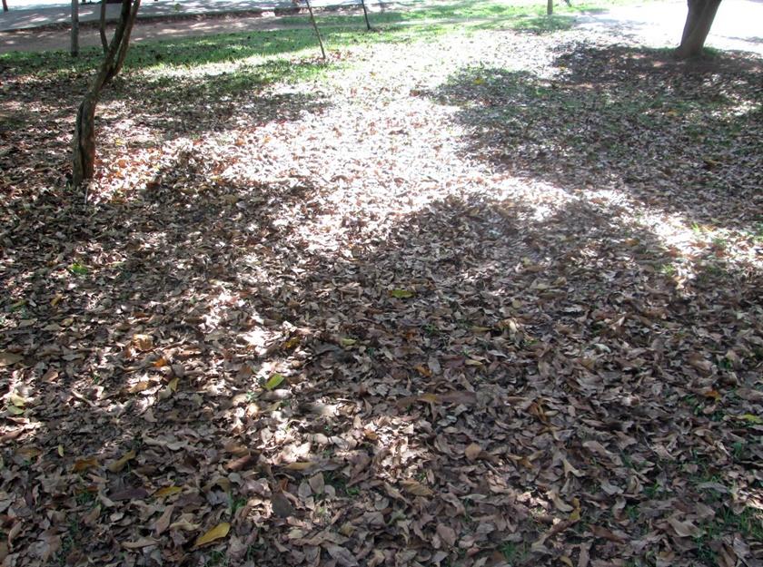 Fotografando - brilho do sol e sombra -folhas no chão-Blog-Dikas e diy