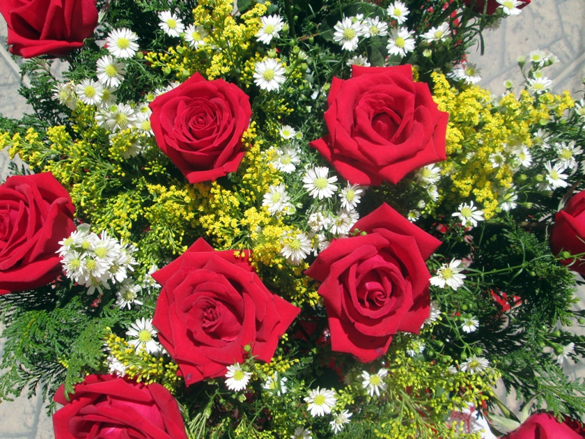 Fotografia- rosa vermelha- flor -branca e amarela-blog Dikas e diy