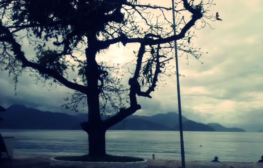 fotografando-arvores-praia-dia-nublado-blog-dikas-e-diy