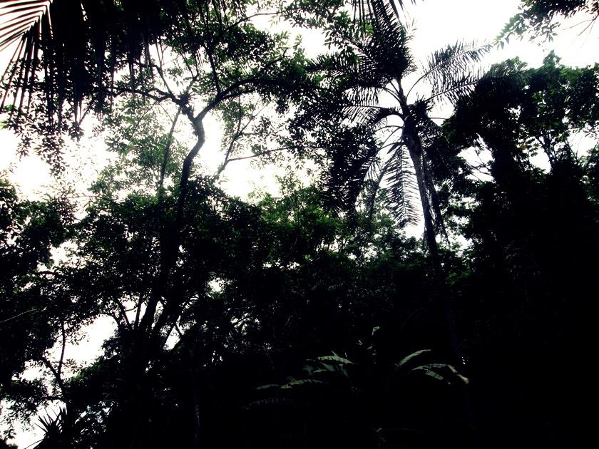 Fotografando árvores tree - arbol - blog- dikas e diy