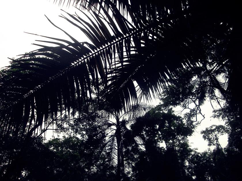Fotografando árvores - tree - arbol - blog dikas e diy