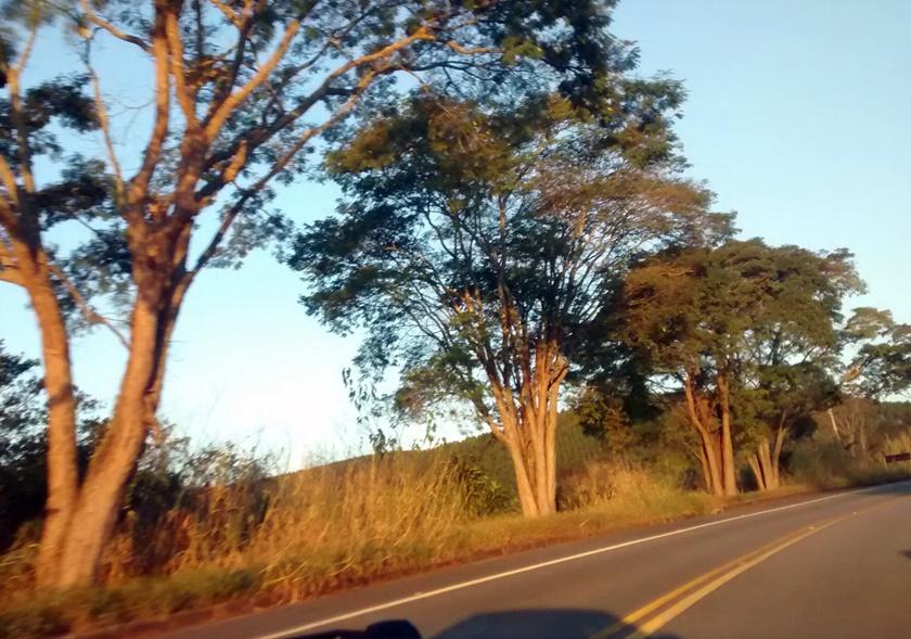 Fotografando - final de tarde - arvores -arbol - tree - Blog Dikas e diy
