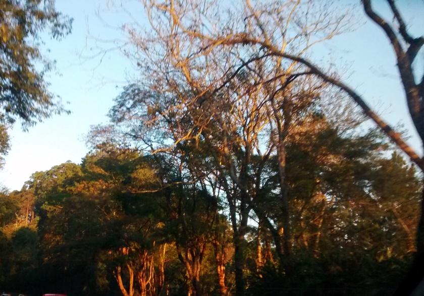 Fotografando - final de tarde- arvores - arbol - tree - Blog Dikas e diy